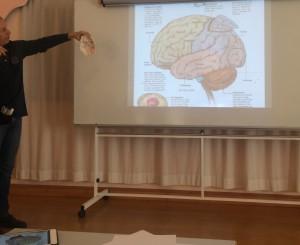karstenmunk-hjernen
